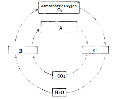 HOTS Questions for Class 9 Science Chapter 14 Natural Resources image - 1