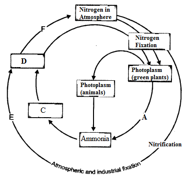 HOTS Questions for Class 9 Science Chapter 14 Natural Resources image - 2
