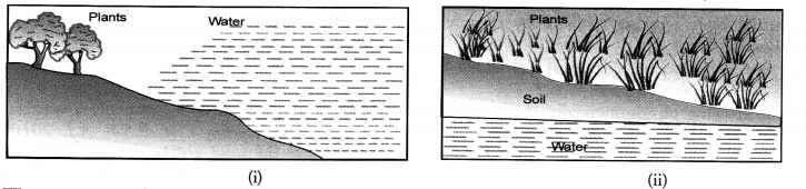 NCERT Exemplar Solutions for Class 10 Science Chapter 16 Management of Natural Resources image - 1
