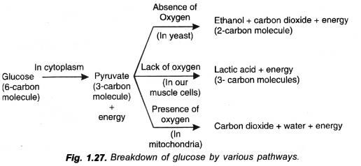 NCERT Solutions for Class 10 Science Chapter 6 Life Processes image - 2