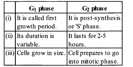 NCERT Solutions for Class 11 Biology Chapter 10 Cell Cycle and Cell Division 6