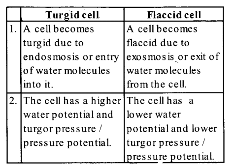 NCERT Solutions for Class 11 Biology Chapter 11 Transport in Plants 15
