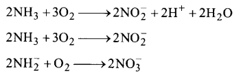 NCERT Solutions for Class 11 Biology Chapter 12 Mineral Nutrition 6