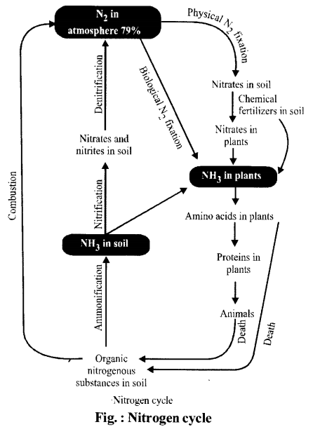 NCERT Solutions for Class 11 Biology Chapter 12 Mineral Nutrition 7