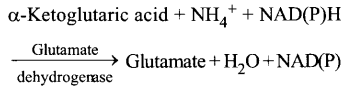 NCERT Solutions for Class 11 Biology Chapter 12 Mineral Nutrition 8