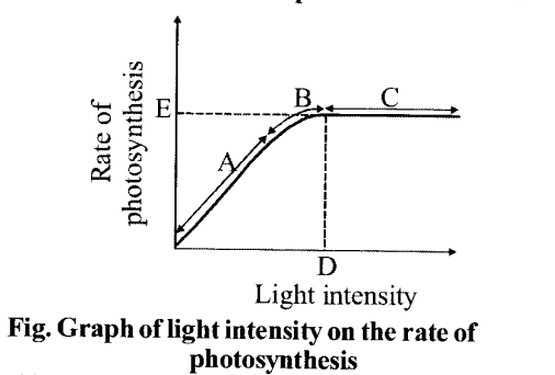 NCERT Solutions for Class 11 Biology Chapter 13 Photosynthesis 1