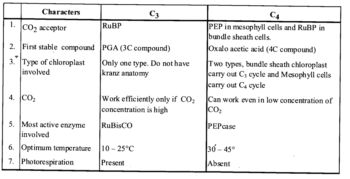 NCERT Solutions for Class 11 Biology Chapter 13 Photosynthesis 2