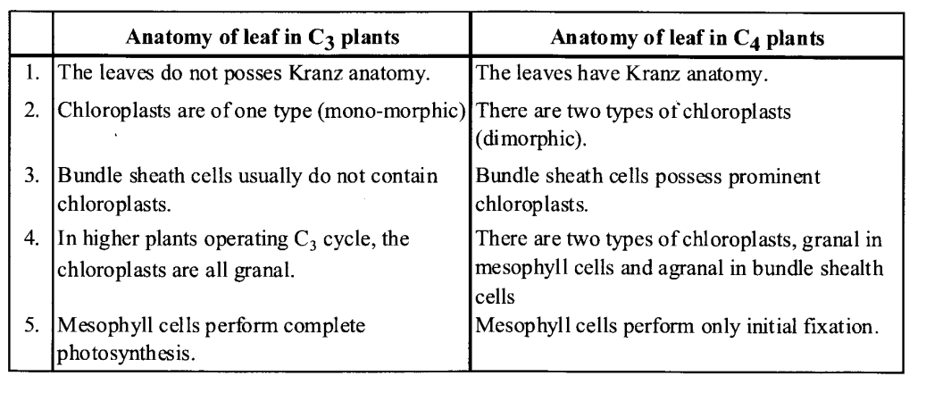 NCERT Solutions for Class 11 Biology Chapter 13 Photosynthesis 4
