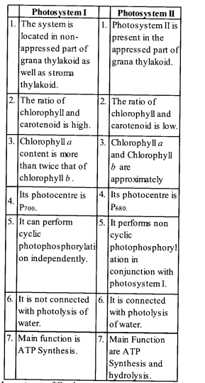 NCERT Solutions for Class 11 Biology Chapter 13 Photosynthesis 7
