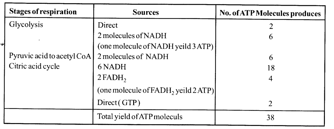 NCERT Solutions for Class 11 Biology Chapter 14 Respiration in Plants 13