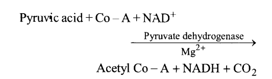 NCERT Solutions for Class 11 Biology Chapter 14 Respiration in Plants 15