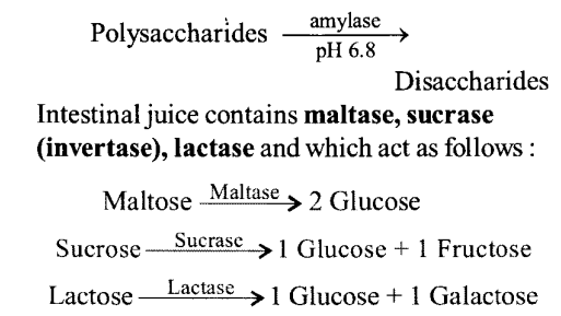 NCERT Solutions for Class 11 Biology Chapter 16 Digestion and Absorption 1