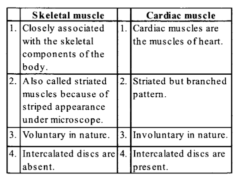 NCERT Solutions for Class 11 Biology Chapter 20 Locomotion and Movement 5