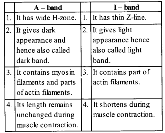 NCERT Solutions for Class 11 Biology Chapter 20 Locomotion and Movement 6