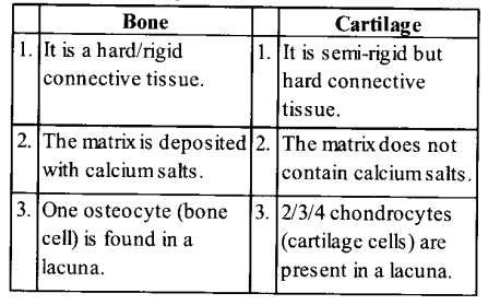 NCERT Solutions for Class 11 Biology Chapter 20 Locomotion and Movement 8