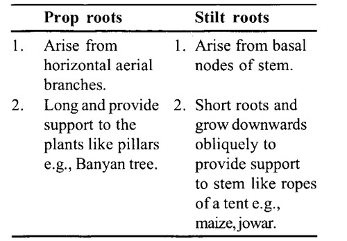NCERT Solutions for Class 11 Biology Chapter 5 Morphology of Flowering Plants 13