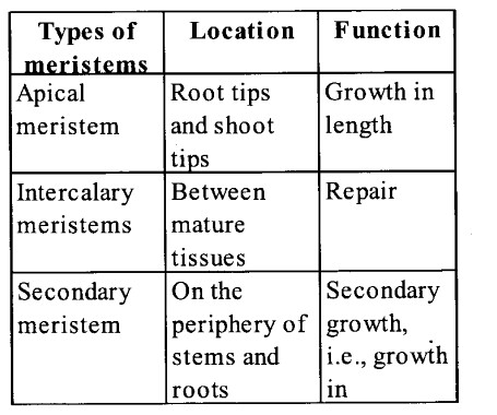 NCERT Solutions for Class 11 Biology Chapter 6 Anatomy of Flowering Plants 1