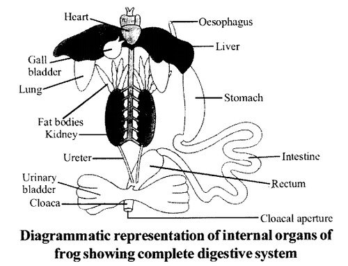 NCERT Solutions for Class 11 Biology Chapter 7 Structural Organization in Animals 12