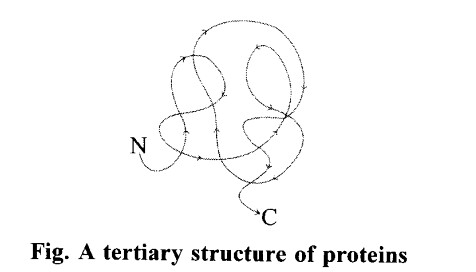 NCERT Solutions for Class 11 Biology Chapter 9 Biomolecules 1