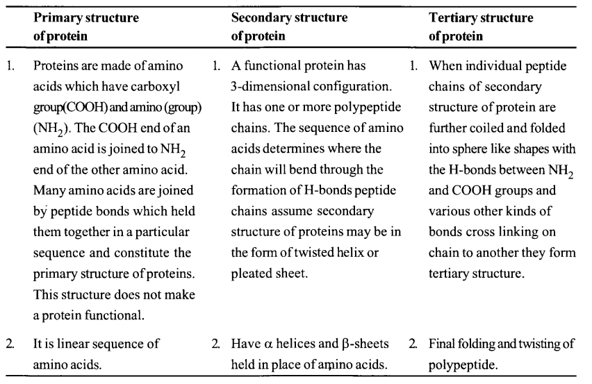 NCERT Solutions for Class 11 Biology Chapter 9 Biomolecules 13
