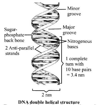 NCERT Solutions for Class 11 Biology Chapter 9 Biomolecules 16