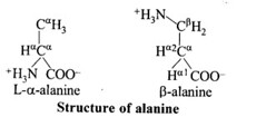 NCERT Solutions for Class 11 Biology Chapter 9 Biomolecules 7