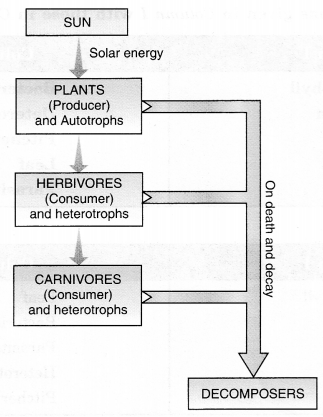 NCERT Solutions for Class 7 Science Chapter 1 Nutrition in Plants Q.5
