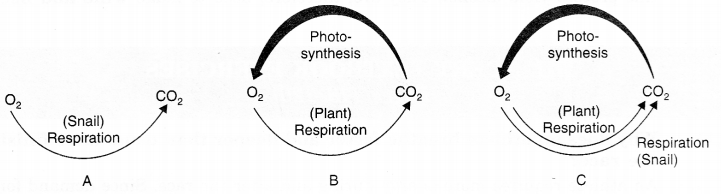 NCERT Solutions for Class 7 Science Chapter 10 Respiration in Organisms Q.4