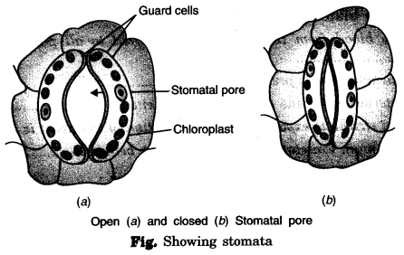 NCERT Solutions for Class 7 Science Chapter 11 Transportation in Animals and Plants Q.6