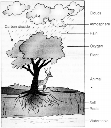 NCERT Solutions for Class 7 Science Chapter 17 Forests Our Lifeline Q.10