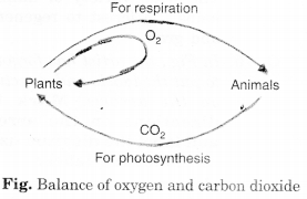 NCERT Solutions for Class 7 Science Chapter 17 Forests Our Lifeline Q.4