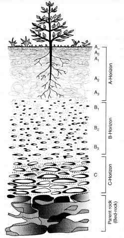 NCERT Solutions for Class 7 Science Chapter 9 Soil Q.7