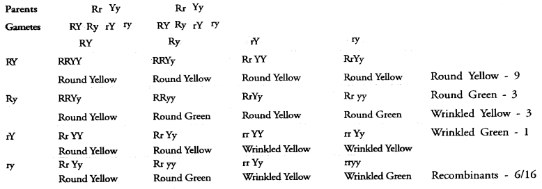 NCERT Exemplar Solutions for Class 10 Science Chapter 9 Heredity and Evolution image - 3