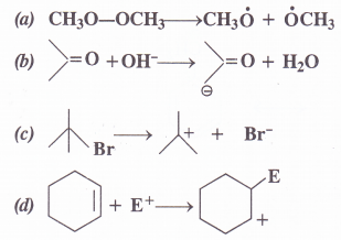 NCERT Solutions for Class 11 Chemistry Chapter 12 Organic Chemistry Some Basic Principles and Techniques 14