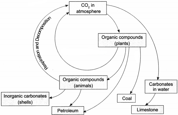 Natural Resources Class 9 Extra Questions and Answers Science Chapter 14 img 1