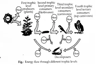 NCERT Solutions for Class 12 Biology Chapter 14 Ecosystem 11.1