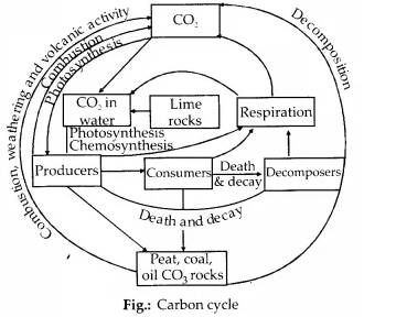 NCERT Solutions for Class 12 Biology Chapter 14 Ecosystem 13.1
