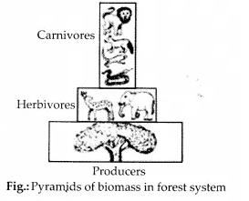 NCERT Solutions for Class 12 Biology Chapter 14 Ecosystem 8.2