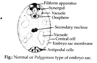 NCERT Solutions for Class 12 Biology Chapter 2 Sexual Reproduction in Flowering Plants Q6.1