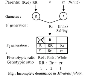 NCERT Solutions for Class 12 Biology Chapter 5 Principles of Inheritance and Variation Q13.2