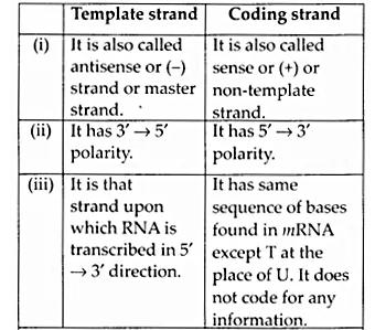 NCERT Solutions for Class 12 Biology Chapter 6 Molecular Basis of Inheritance Q8.3