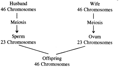Heredity and Evolution Class 10 Important Questions Science Chapter 9 image - 11