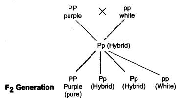 Heredity and Evolution Class 10 Important Questions Science Chapter 9 image - 3