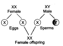 Heredity and Evolution Class 10 Important Questions Science Chapter 9 image - 7