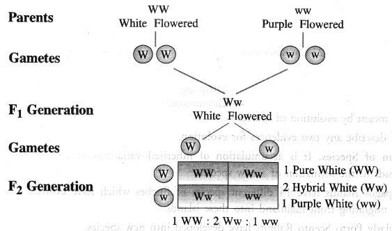 Heredity and Evolution Class 10 Important Questions Science Chapter 9 image - 9
