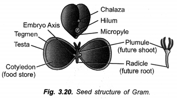 How do Organisms Reproduce Class 10 Important Questions Science Chapter 8 image - 27