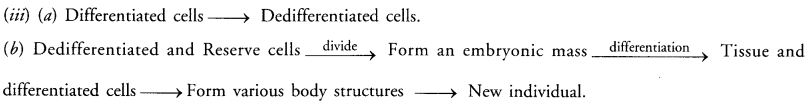 How do Organisms Reproduce Class 10 Important Questions Science Chapter 8 image - 30