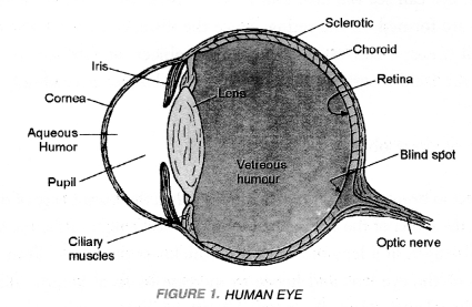 Human Eye and Colourful World Class 10 Important Questions Science Chapter 11 image - 23