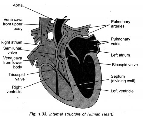 Life Processes Class 10 Important Questions and Answers Science Chapter 6 image - 13