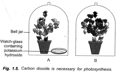 Life Processes Class 10 Important Questions and Answers Science Chapter 6 image - 20